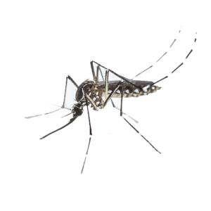 Link to Description of Mosquitos Pest Services